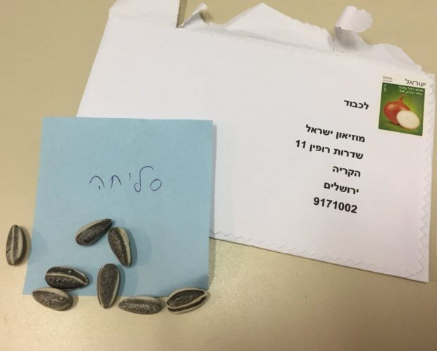 Ai Weiwei sunflower seeds returned by Israel Museum patrons. Image: IMJ