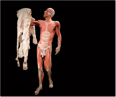 גופה בתערוכת Bodies. צילום: swamibu (cc-by-nc)
