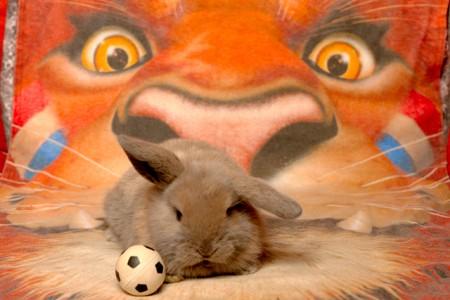 Soccer 2012, By gipukan (rob gipman) - Gip Gipuka (cc-by-nc)