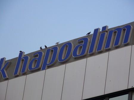 ציפורים על שלט בנק הפועלים ברחוב יהודה הלוי בתל אביב, 24.8.2008. צילום: עידו קינן