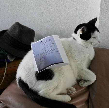 אפשר ללטף את החתול שלך? לא! יש עליו צו איסור פרסום! צילום: יוסי גורביץ