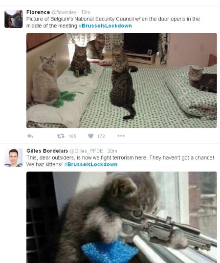 תמונות של חתולים שהועלו בהשתגית #BrusselsLockdown