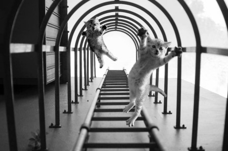 תגובות לתצלום המטוס המפוברק של יו וויי שיה. תגובה של תומאס לים - חתולים קופצים