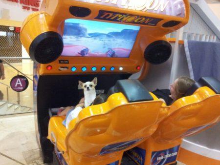 כלב במכונת ארקייד. תמונה: עידו קינן, חדר 404 (cc-by-sa)