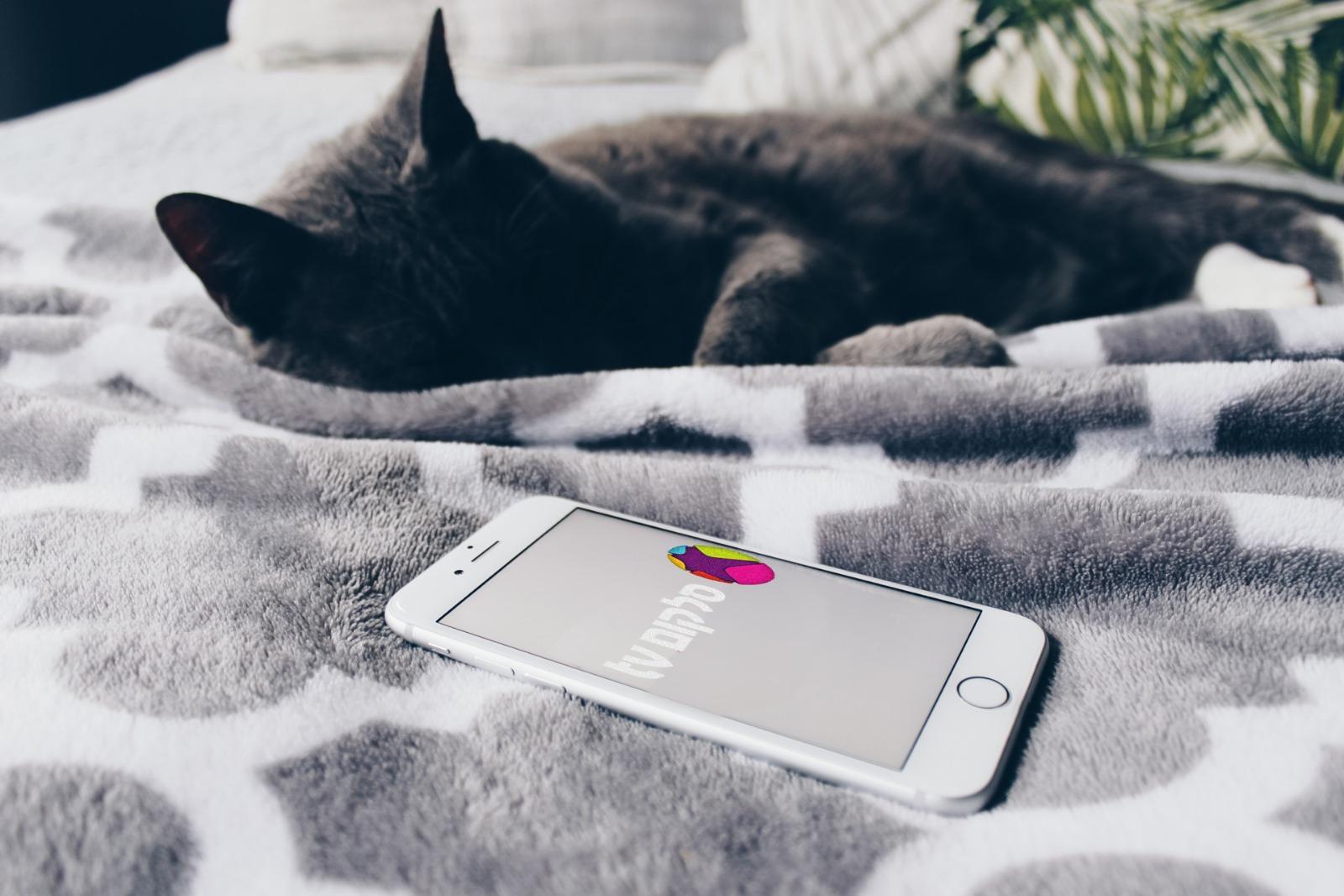 חתול מסנן את סלקום 📸 Stock Catalog (cc-by) ו-Podcasti.co