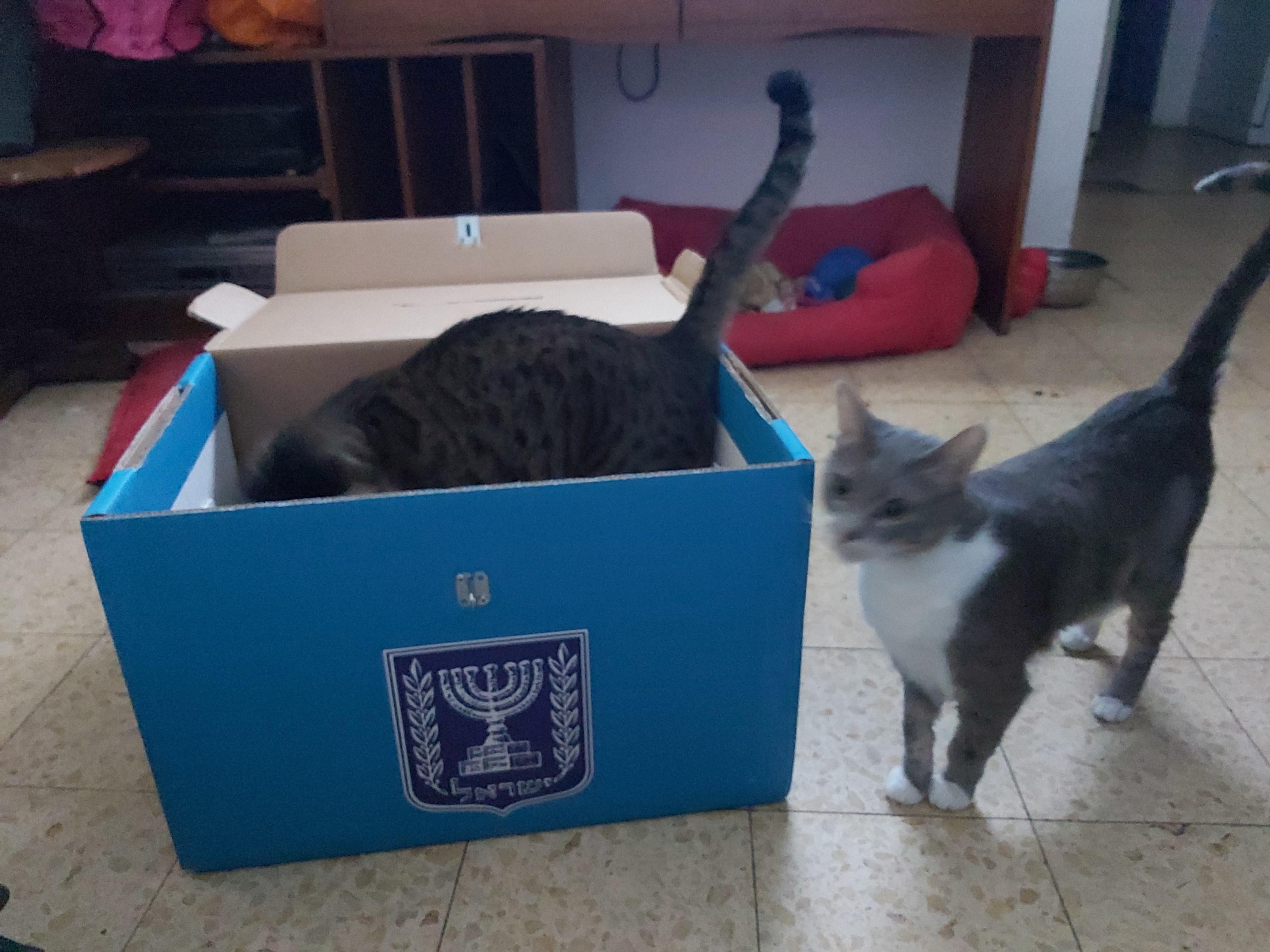 החתולים בדינג'אן ומלפוף בתוך קלפי בחירות 📸 עידו קינן